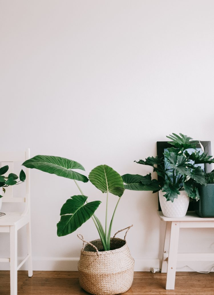 Top 3 Tips to Declutter your Space